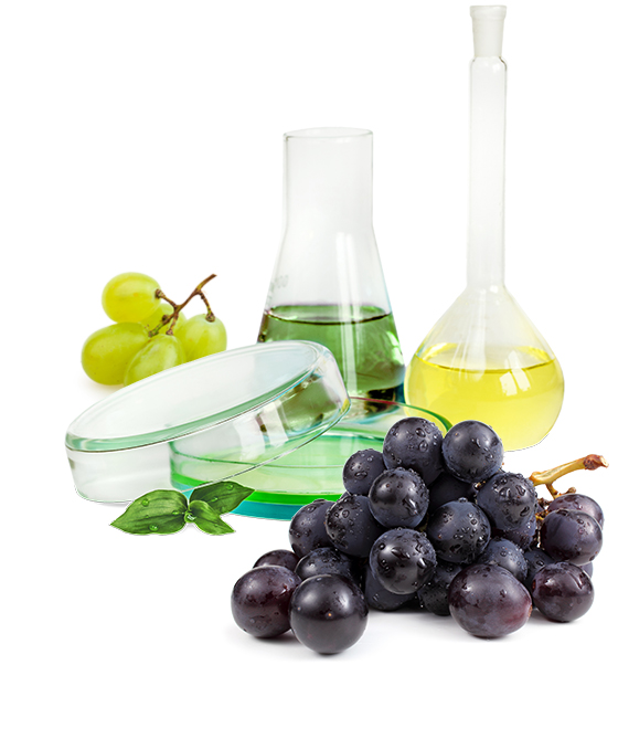 A petri dish, laboratory flask, and a boiling flask with a round bottom filled colored fluids or solids, between two sets of grapes